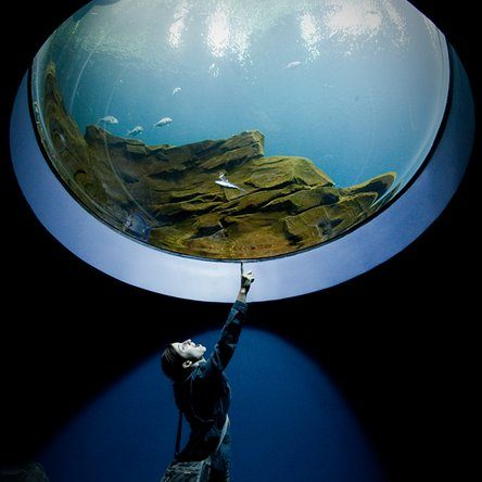 https://www.christinasalerno.com/wp-content/uploads/2021/08/aquarium-e1628365937883.jpeg